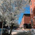 Philadelphia street lined with trees